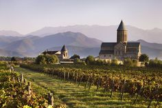 Vineyard and Alaverdi Cathedral with Caucasus Mountains in background.