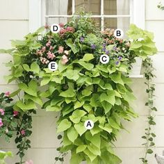 Looking forward to creating some fun planters and I love this! I tells you exactly what to plant together. Great ideas @bhg .A sweet potatoe vine B Snapdragon Floral showers rose pink C Browalia Blue Bell D Pentas Graffiti Pink E Snapdragon Floral Showers Apricot