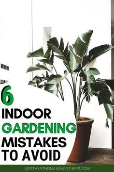 6 Indoor Gardening Mistakes Beginners Should Avoid Indoor gardening tips for beginners. Inside Plants, Cool Plants, Fake Plants, Artificial Plants, Gardening For Beginners, Gardening Tips, Indoor Gardening, Container Gardening, Vegetable Gardening