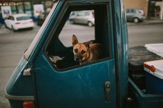 Dog Dogs, Photography, Animals, Photograph, Animales, Animaux, Pet Dogs, Fotografie, Doggies