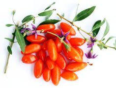 Fructele Goji Berry se plantează mai întâi în ghiveci, apoi se vor muta în grădină. Menţin sănătarea oaselor, cresc imunitatea şi reglează hormonii.
