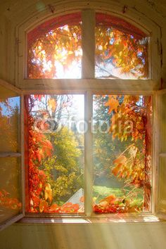 autumn scenery sunlight through the window Beautiful World, Beautiful Places, Beautiful Pictures, Heaven Pictures, Pretty Images, Autumn Scenery, Autumn Aesthetic, Window View, Through The Window