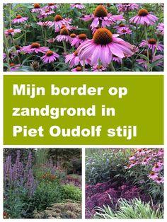Tuinieren op zandgrond: Een border in Piet Oudolf stijl op droge grond Small Gardens, Outdoor Gardens, Garden Mural, Garden Borders, Garden Care, Companion Planting, Small Trees, Garden Cottage, Garden Styles