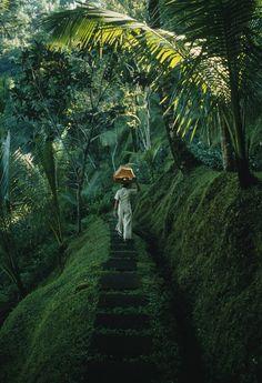 Forest walk. Bali, Indonesia.
