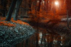 enchanted forest scene II. by ildiko-neer on DeviantArt