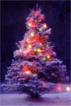 Buddhist Holidays Buddhist Beliefs, Buddhism, Holiday Treats, Holiday Decor, Winter Holidays, Religion, Christmas Tree, Ideas, Teal Christmas Tree
