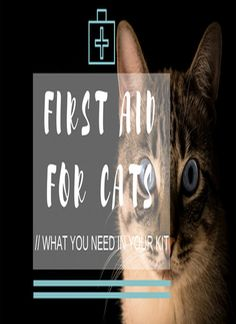 If there could be one thing you could do to save your cat's life in an emergency, would you? of cat people say they would be willing to give their cat CPR but how do you do it Cat Cpr, Dog Cat, Coconut Oil Cats, Health Facts, Health Tips, Cat Health Care, Sick Cat, Cat Signs, Cat People