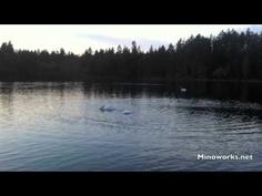 Quaint Beautiful Swan Beautiful Swan, River, Beach, Movies, Outdoor, Outdoors, The Beach, Films, Beaches