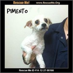 Pimento (male) Maltese Mix Age: Young Adult Adoption Fee: $180Animal Location: WAGS Pet Adoption 6621 Westminster Blvd Orange County Westminster, CA 92683 MAP IT! Contact: 714-887-6156 Facebook: Email to Friend Problems/Corrections Mark As Unavailable