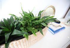 christmas_6 Create, Plants, Christmas, Home Decor, Xmas, Decoration Home, Room Decor, Navidad, Plant
