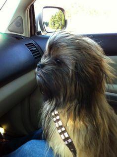 OMGOODNESS! My nerdphew, er I mean nephew would love this! Chewbacca dog, super cute.