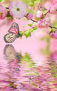 Pink butterfly by Live Wallpaper Workshop Butterfly Kisses, Butterfly Flowers, Beautiful Butterflies, Beautiful Flowers, Yellow Flowers, Butterfly Pictures, Monarch Butterfly, Water Flowers, Green Butterfly