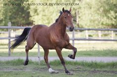 Standardbred 49 by Colourize-Stock