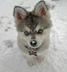 Cute :o