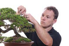Master at Work - Bonsai by Antony Smith from Willow Bonsai Store / Bonsai Addicts Club #bonsai #hobby #decorative #tree #photography #canon #canonphoto #protofoto #dalton #dingelstadphotography #throughmylens