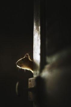 une-maison-abandonnee-dans-les-bois-envahie-par-des-dizaines-d-animaux-en-tous-genres10
