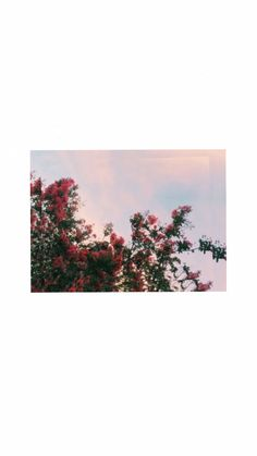 İphone Wallpapers> Pinterest : esina1