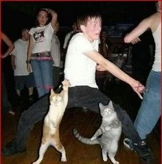 What catnip and psychedelic red dot can do to a cat, can do a shindig...ha ha