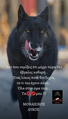 Wolf, Angel, Wolves, Timber Wolf, Angels