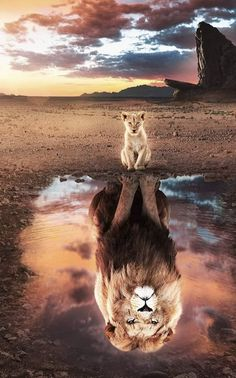 The Lion King 🦁 Tag your creative friends! Edit photo … The Lion King 🦁 Tag your creative friends! Photo edited by @ … – The Lion King 🦁 Mark your creative friends! Photo edited by @ – The Lion King 🦁 Tag your creative friends! Edit photo … The … The Lion King, Lion King Art, Lion King Movie, Lion Art, Disney Lion King, Lion King Poster, Tier Wallpaper, Cute Cat Wallpaper, Cute Disney Wallpaper