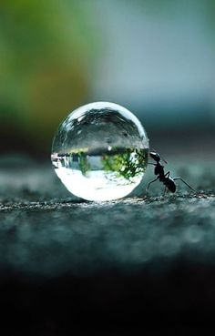 The Tiniest World...