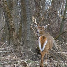 Deer hunting is made easier with the use of deer scent sticks.