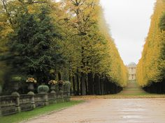 my fave part about living in Berlin was these trees in early October. Potsdam, Germany