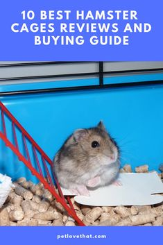 What is the best hamster cage in the market? This is a question most people ask when they are looking for a quality hamster cage.