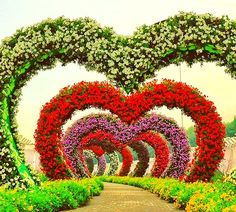 Hundreds of Thousands of petunia flowers grow within each and every arch of the hearts passage at the Dubai Miracle Garden. Sunflowers are also grown at the edges or borders of the passage. Growing Flowers, Large Flowers, Real Flowers, Geranium Plant, Geranium Flower, Heart Structure, Million Flowers, Three Color Combinations, Miracle Garden