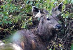 Types Of Photography, Photography Gallery, Photography Website, Photography Portfolio, Wildlife Photography, Landscape Photography, Wildlife Safari, Jungle Safari, Sambar Deer