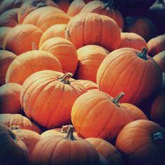 pumpkin photograph, autumn decor, halloween, orange, pumpkin patch.