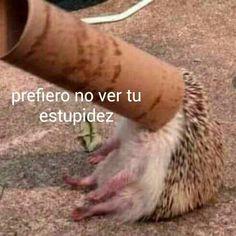 IMAGENES PARA CONTESTAR COMENTARIOS DE FB. (Editando) - Gracias - Wattpad Cute Memes, Dankest Memes, Funny Memes, Memes Lindos, Current Mood Meme, Meme Stickers, Cartoon Profile Pics, Spanish Memes, Frases
