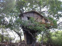 Kruger treehouse camp, outside view Private Games, Game Reserve, In The Tree, Treehouse, South Africa, Safari, African, Tours, Park