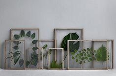 Blumen mal anders: Gepresste Blumen im Bilderrahmen aus Holz