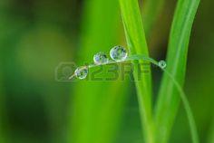 gotas de rocio: Dew drops on leaves green grass backgrounds Foto de archivo