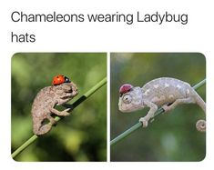 29 More Awesome Randoms To Chill With - Ftw Gallery Double Entendre, Sloth, Funny Animals, Chill, Hate, Bird, Gallery, Memes, Awesome