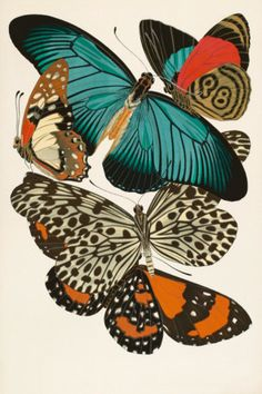 Vintage-feel butterfly print
