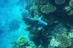 The Great Barrier Reef and the Coral Sea (Queensland, Australia) p. Places Around The World, Around The Worlds, Places To See, Places Ive Been, Types Of Fish, Queensland Australia, Great Barrier Reef, Future Travel, Deep Sea