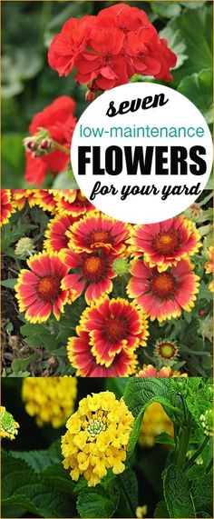 7 Low-Maintenance flowers for Your Yard.  Plant the right flowers to keep your yard looking fabulous with very little labor.  Colorful flower ideas for your planters and outdoor pots.