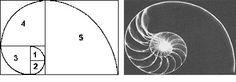 La regla o sección áurea es una proporción entre medidas. Se trata de la división armónica de una recta en media y extrema razón. Esto hace referencia a que el segmento menor es al segmento mayor, como este es a la totalidad de la recta. O cortar una línea en dos partes desiguales de manera que el segmento mayor sea a toda la línea, como el menor es al mayor