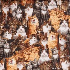 colorful Robert Kaufman fabric funny cute cat 1
