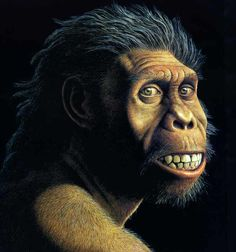 homo habilis | HOMO HABILIS | Pinterest | Homo habilis and Archaeology