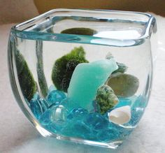 I want to make one and use my Sea Glass! Under the Sea Marimo Living Moss Ball Aquariu