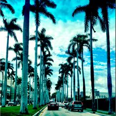 Palm Trees in PB