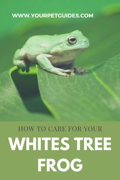 110 Dumpy Tree Frog Ideas Frog Cute Frogs Frog And Toad