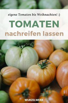 Tomaten nachreifen lassen: Bis Weihnachten eigene Tomaten essen! - Wäre es nicht toll noch bis Weihnachten Tomaten aus dem eigenen Garten zu essen? In diesem Artikel findest du eine Anleitung um grüne Tomaten im Haus oder der Küche nachreifen zu lassen, ganz ohne Gewächshaus. Auch verrate ich dir einen super Tipp um unreife Tomaten als Chutney haltbar zu machen. #Tomaten #Selbstversorgung #Wurzelwerk