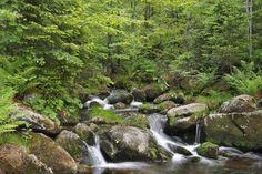 """Nationalpark in Bayern -  Bayerischer Wald  Er ist der erste Nationalpark Deutschlands: Im Oktober 1970 wurde der <a href=""""http://www.nationalpark-bayerischer-wald.de/"""" target="""""""" rel=""""nofollow"""">Nationalpark Bayerischer Wald </a> gegründet und umfasst mittlerweile ein Gebiet von gut 24.000 Hektar. Auf mehr als 300 Kilometern markierter Wanderwege kann die Wildnis mit ihren Bergbächen, Gipfeln und Wäldern erkundet werden."""