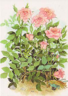 Roses -by Inge Look by FloridaGirl46, via Flickr