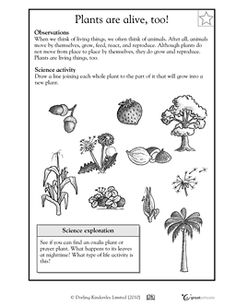 Printables Science Worksheet 2nd Grade food chains science and kids worksheets on pinterest for 2nd grade