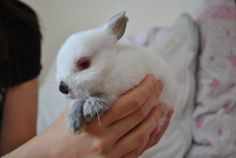Little Bunny Rests Paws on Owner's Hand - August 23, 2011